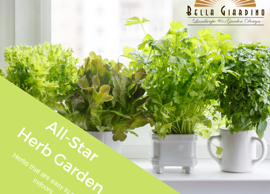 All -Star Herb Garden