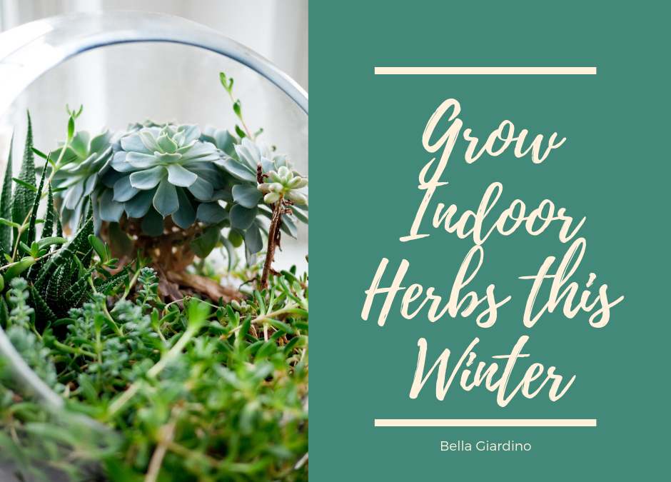 Grow Indoor Herbs this Winter