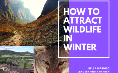 How to attract wild life in the winter