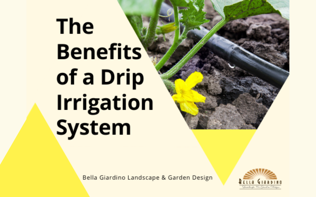 Benefits of a Drip Irrigation System Colorado Springs